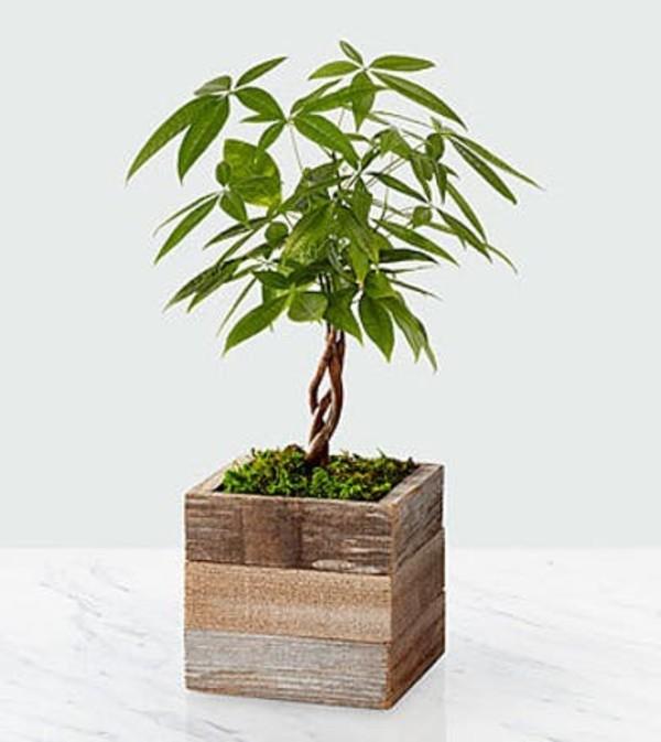 Health, Wealth & Happiness Money Tree