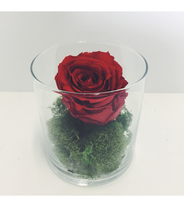 Perfectly Preserved Rose - Red