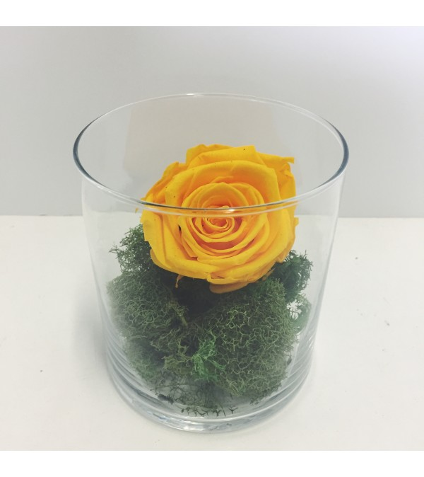 Perfectly Preserved Rose - Yellow