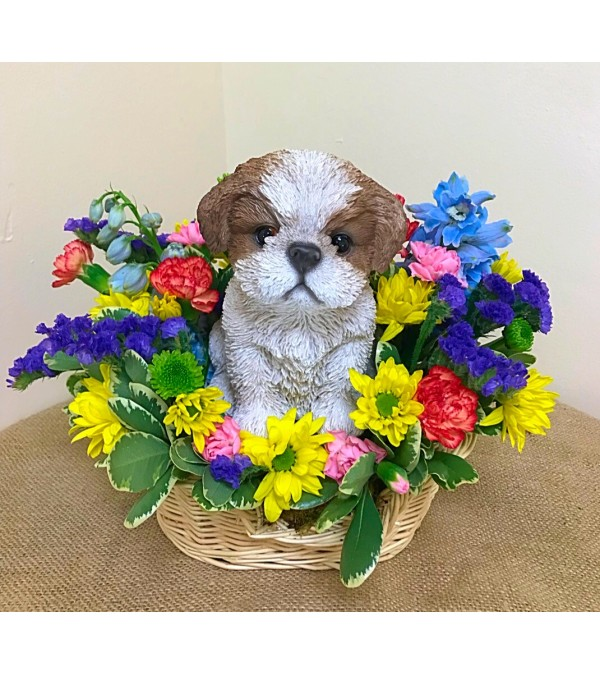 Shih Tzu in a Basket