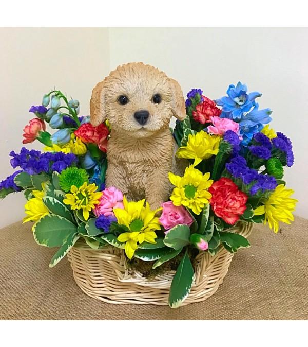 Lovely Labrador in a Basket