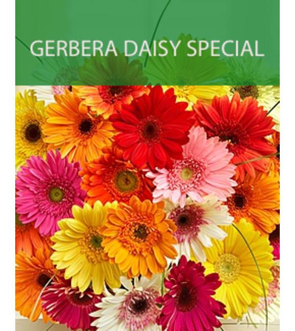 Wrapped Gerbera Daisy Special
