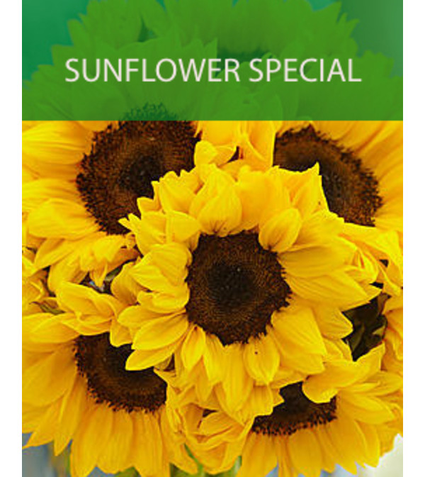 Wrapped Sunflower Special