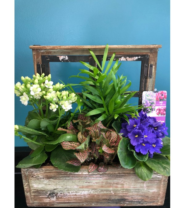 Antique Window Box Plant