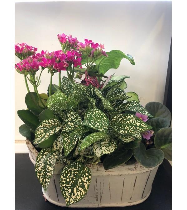 Assorted Planter