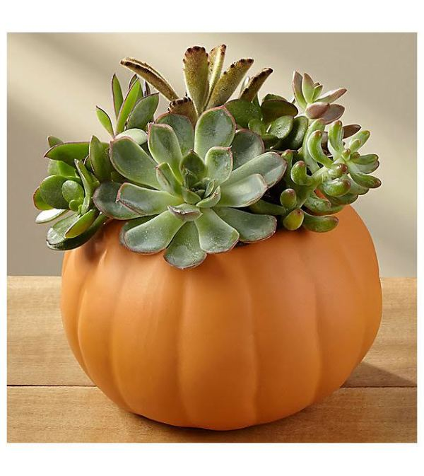 Autumn Essence Succulent Planter