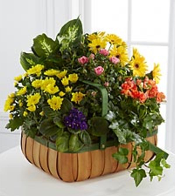 Gentile Blossoms Basket