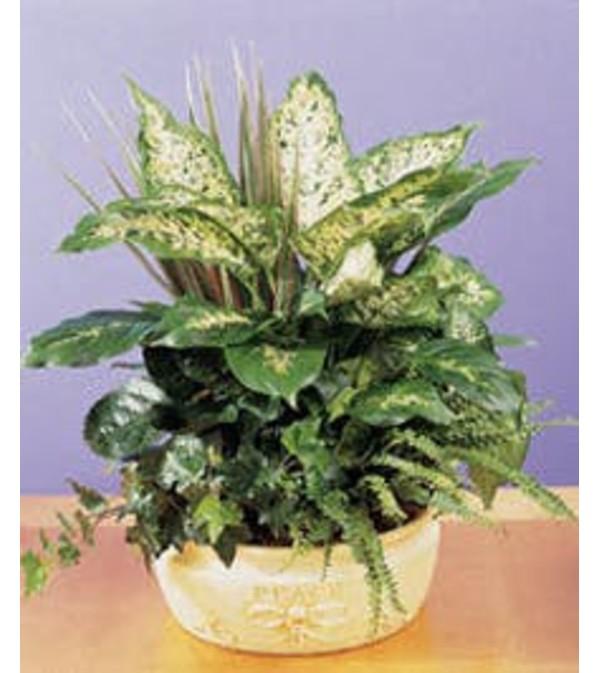 Mixed Dish Garden Planter