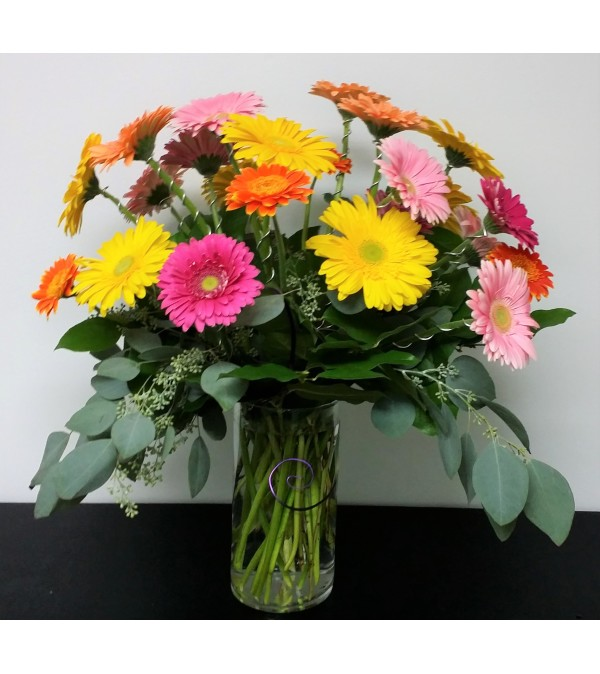 Everyone Loves Gerberas