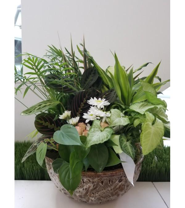 Customer Appreciation Dish Garden