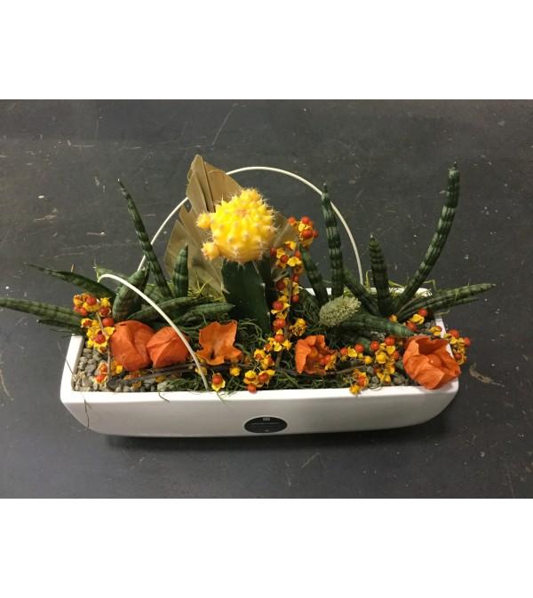 Fall Cacti