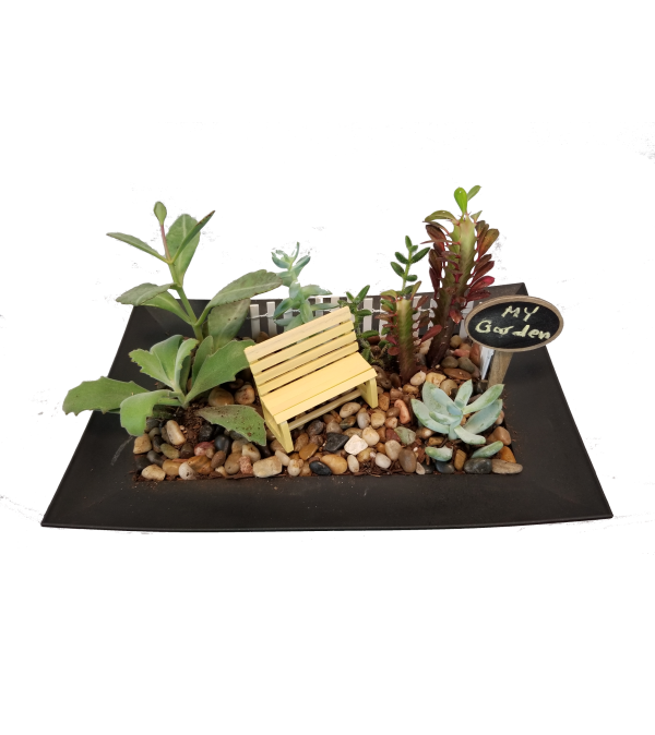 Whimsical Succulent Garden
