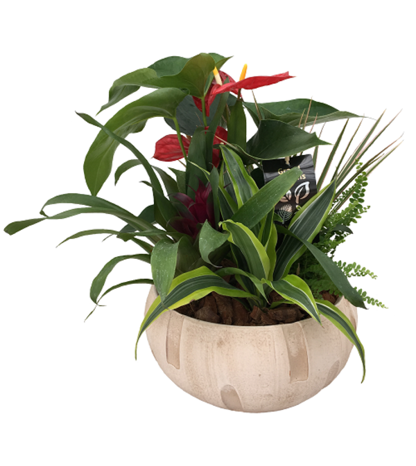 The Anthurium Tropical Planter