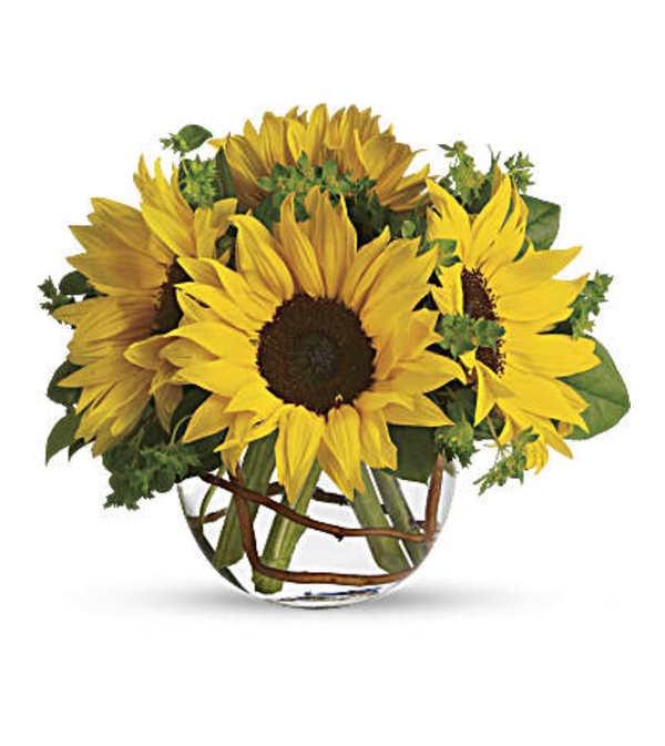 Sunny Sunflowers T152-2