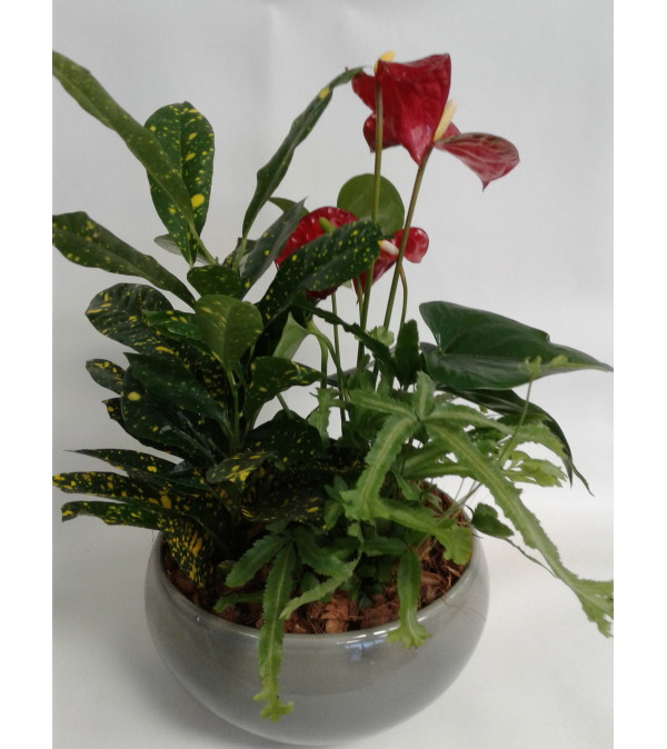 Anthirum Tropical Planter