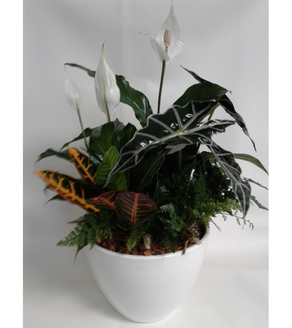 Elegant Peace Lily with Tropicals