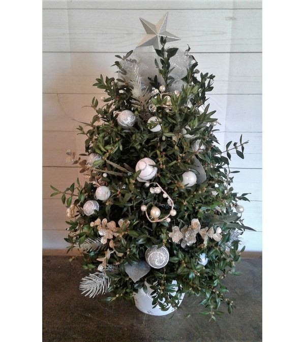 Silver Snows Boxwood Tree
