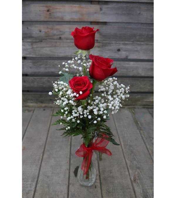 3 Rose Bud