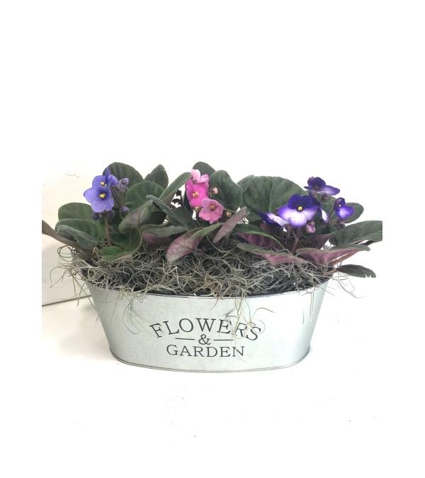Garden of Violets