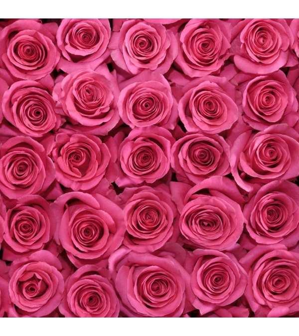 Rosaprima 12 Premium long stem hot pink roses  in a vase