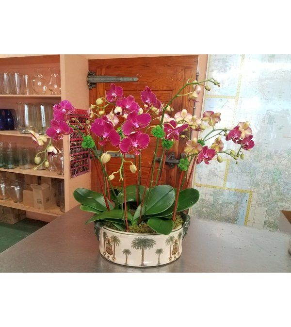 MORROCAN ORCHIDS