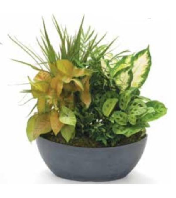Planter - Long Planter - 710D