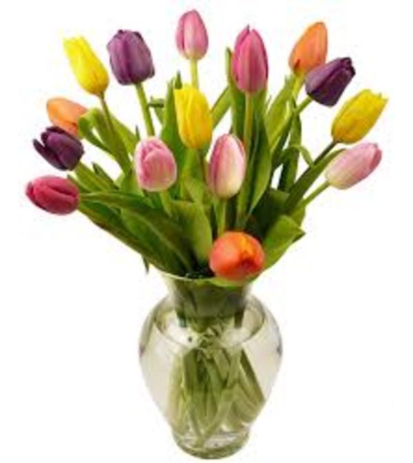 Tulips Galore