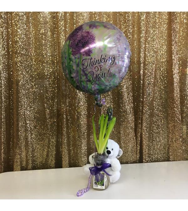 Spring Hyacinth Gift