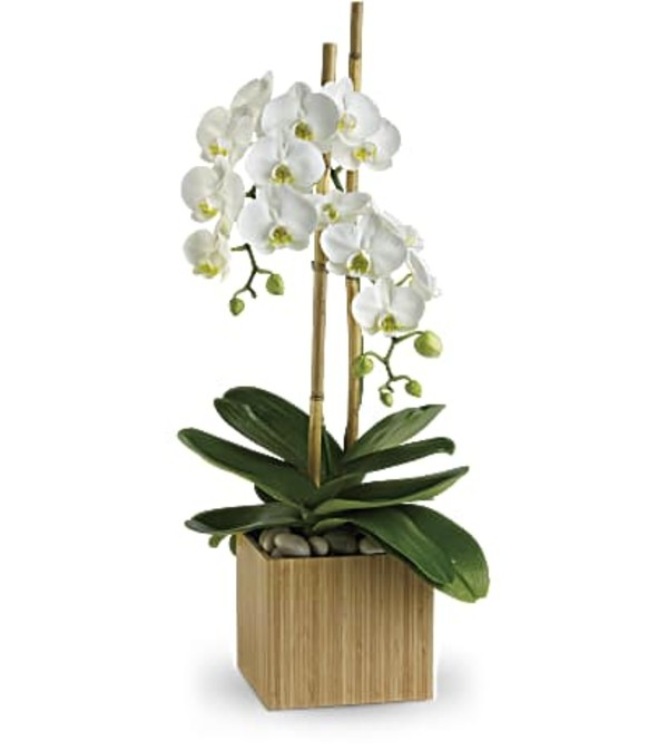 The Opulent Orchids