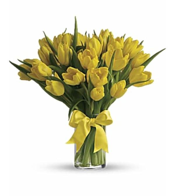 Sunny Yellow Tulip