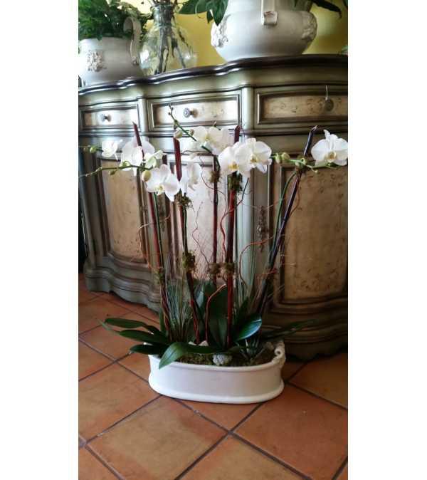 Belden's Tropcal Orchids