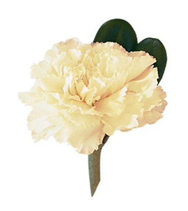 Carnation Boutonniere