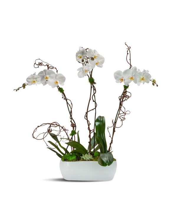 Blooming Trio 2019