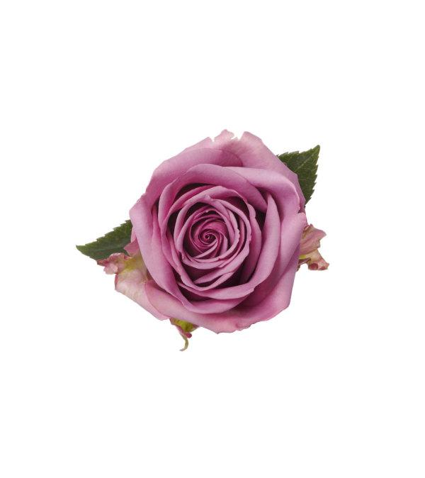 1 Dozen Premium Lavender Rose