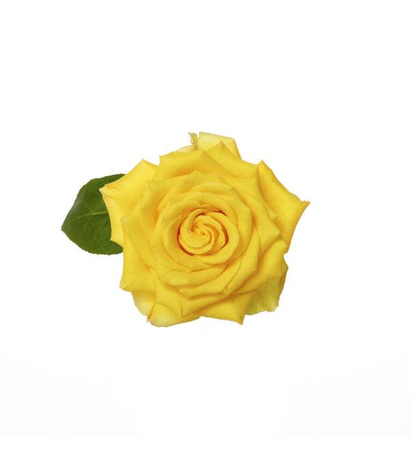 Three Dozen Premium Yellow Roses
