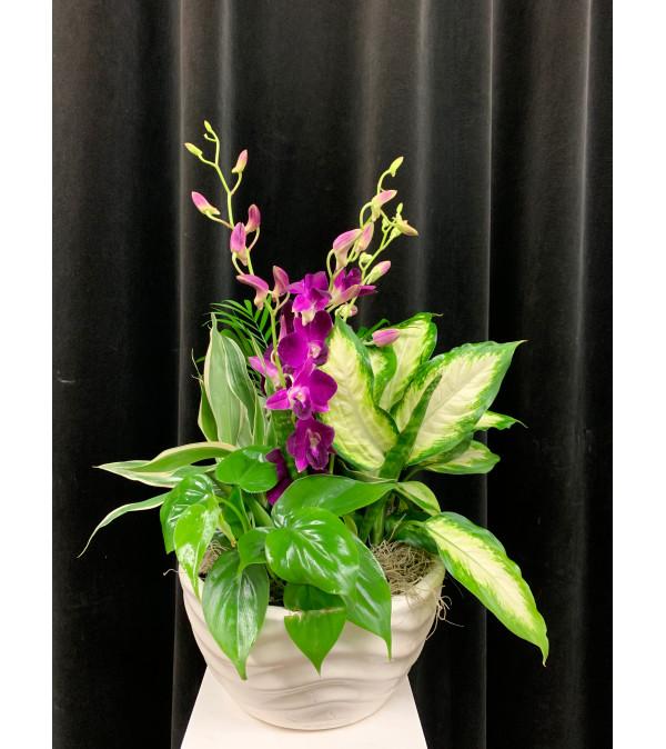 Elegant Garden Planter