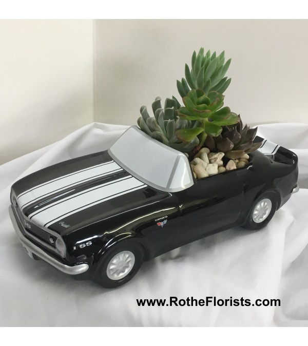 '67 Chevy Camaro with Succulents