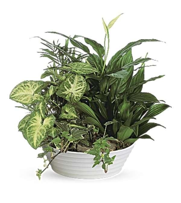 Medium Green Plant Dish Garden