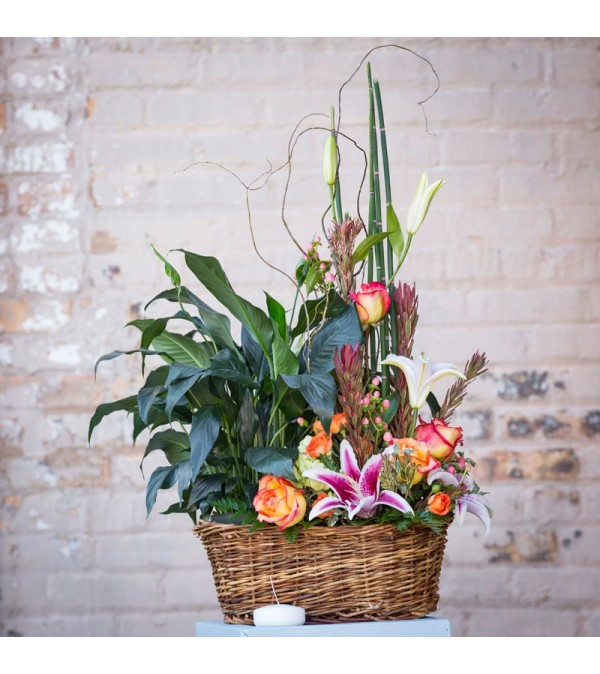 Plants and Blooms