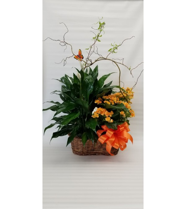 Combination Plant Basket (Color and Plants  May Vary)