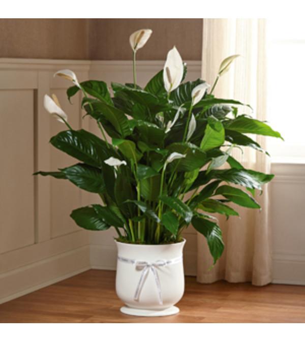 8'' Comfort Planter FTD