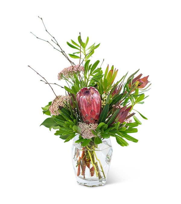 Posh Protea by Country Gardens