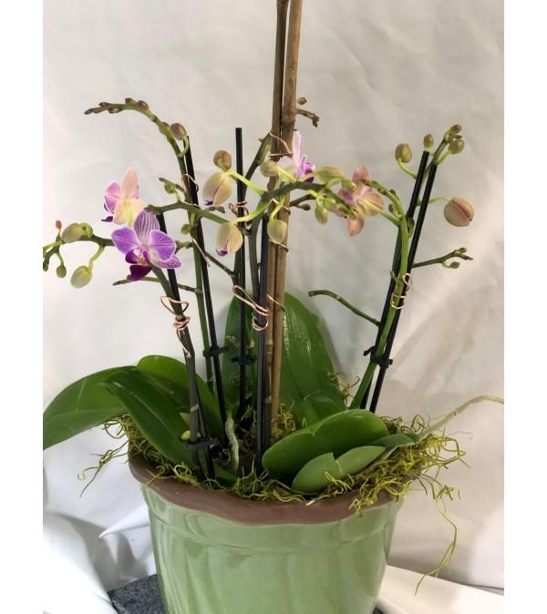 Elegant Orchid Gift