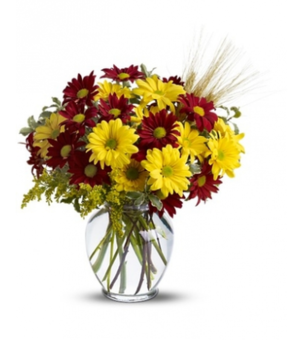 Fall for Daisies by Teleflora SALE!
