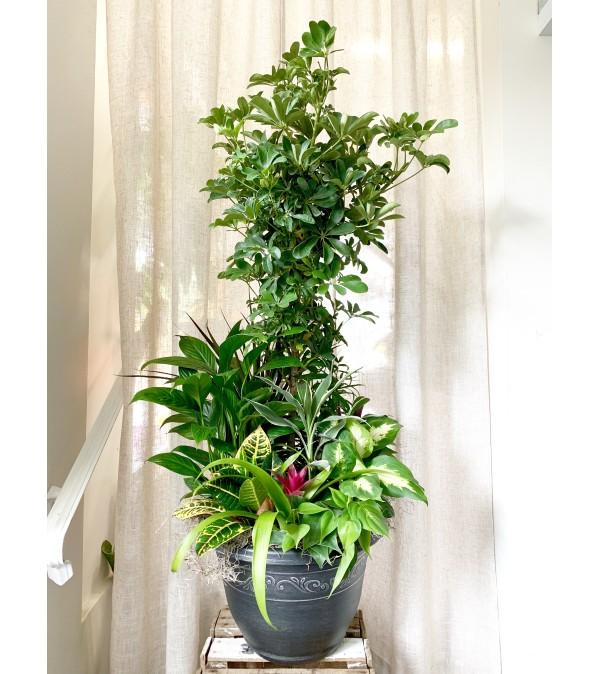Large Assorted Foliage Planter