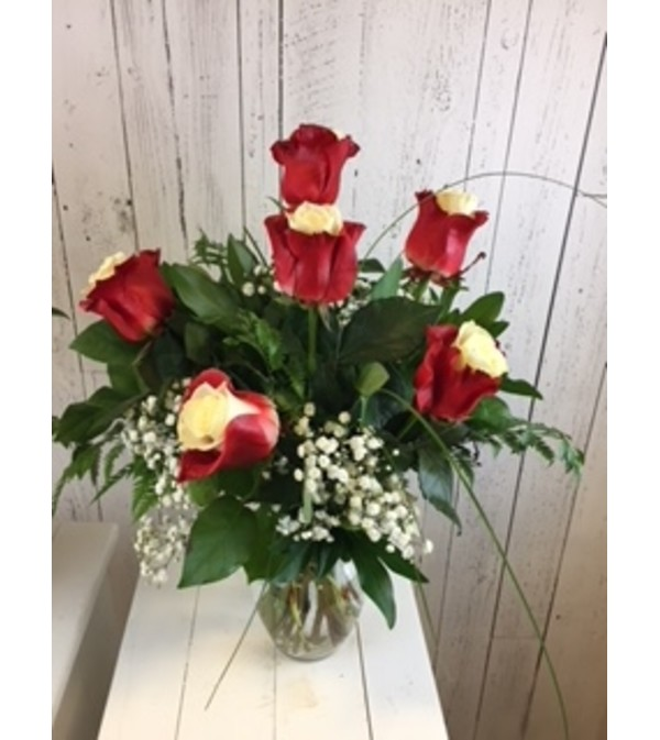 Vibrant Bicolor Red Rose