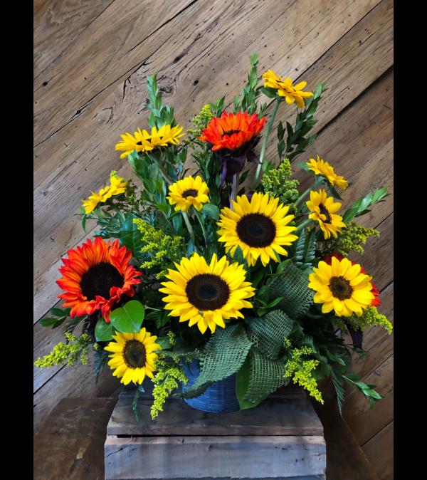 Sunflower Sunsation
