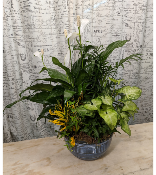 Blooming Peace Lily Dish Garden