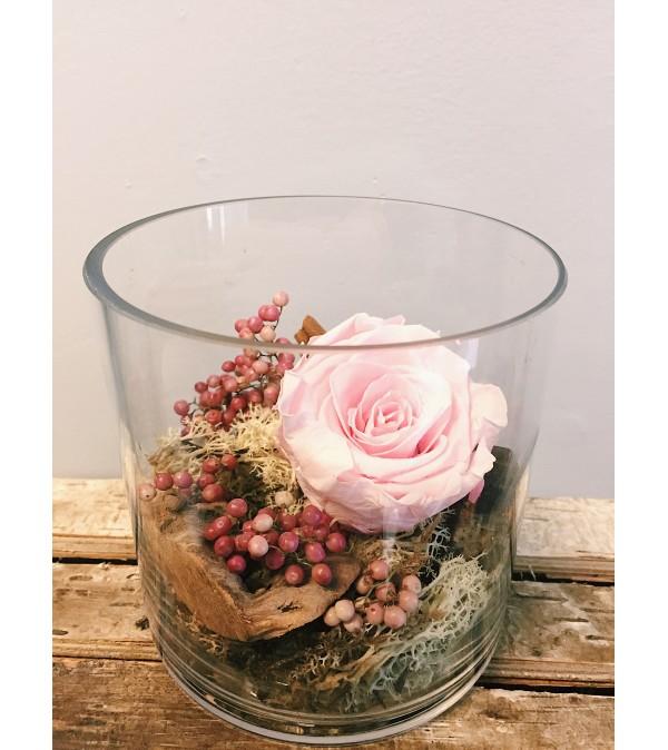 Preserved Rose (Blush)