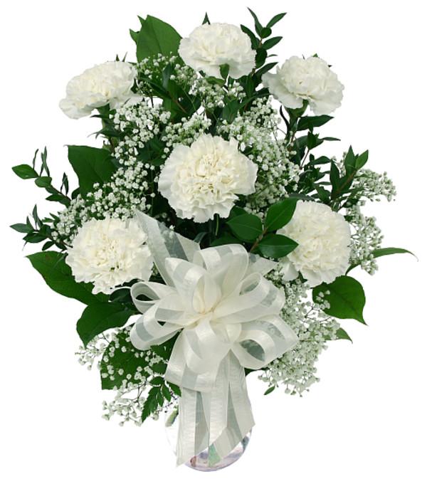 6 White Carnations 19
